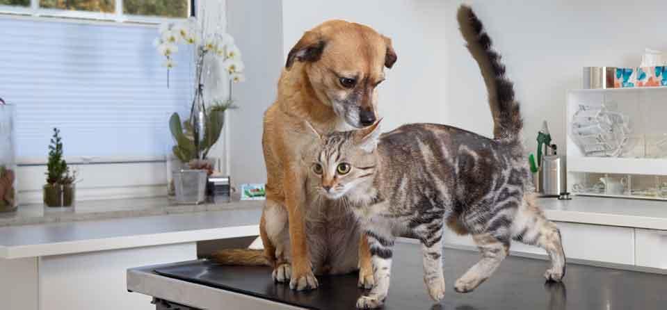 Behandlungsraum beim Tierärztin Attendorn